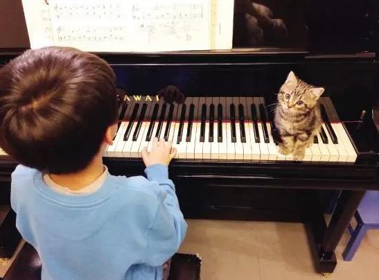 邢台钢琴调律收费标准